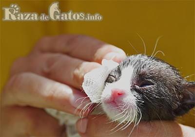 Limpieza e higiene de tu gato