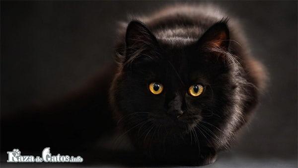 Foto de un gato en la oscuridad.  Vision gatuna ¿como ven los gatos en la noche?