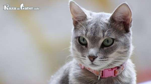 Nombres para gatas ¿como elegir un nombre para mi gata?
