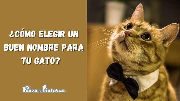 Nombres para gatos – ¿Cómo elegir un buen nombre para tu gato?