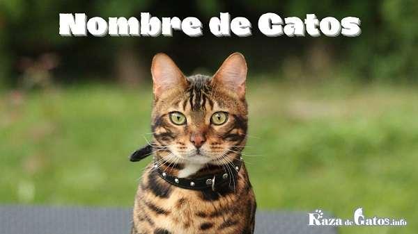 248 Nombres para Gatos Machos