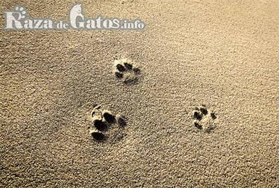 Tipos de arena para gatos.