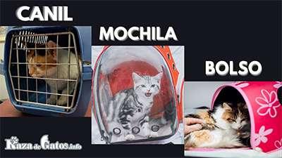 Transportadoras para Gatos