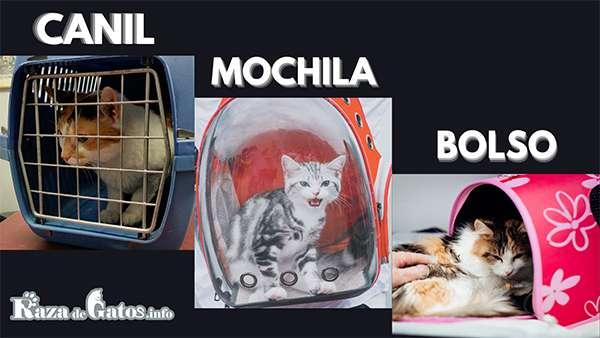 Transportadoras para Gatos – Lo que debes saber antes de comprar