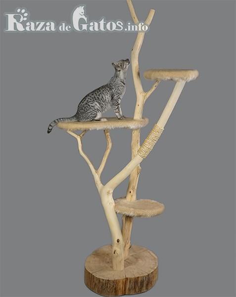 Gato escalando en trepador . Arbol gatuno.
