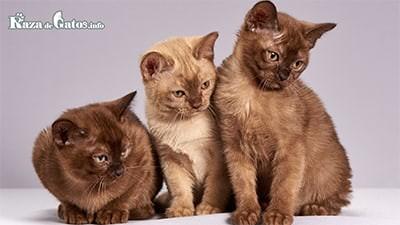 ¿hasta qué edad crecen los gatos? etapas de crecimiento.