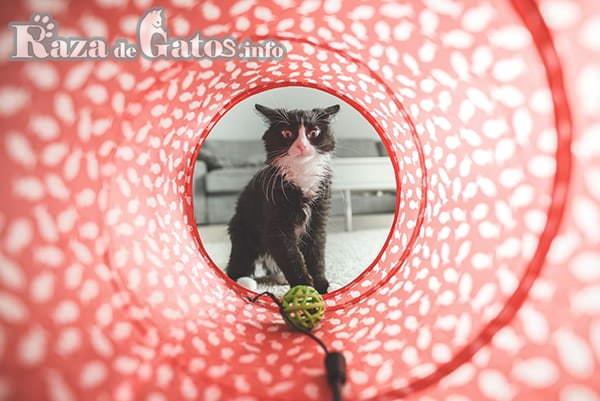 Imágen de Tunel para gatos.
