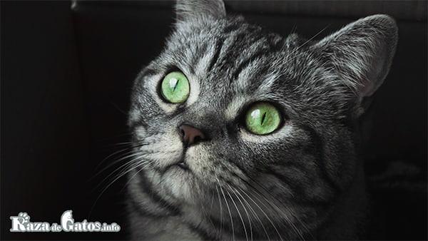 Vision de los gatos a la noche. imagen para el articulo de como ven los gatos.